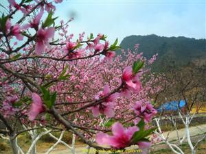 Du lịch Sapa mùa Xuân có gì hấp dẫn du khách đến vậy