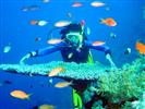 Tour Sài Gòn Phú Quốc lặn ngắm san hô